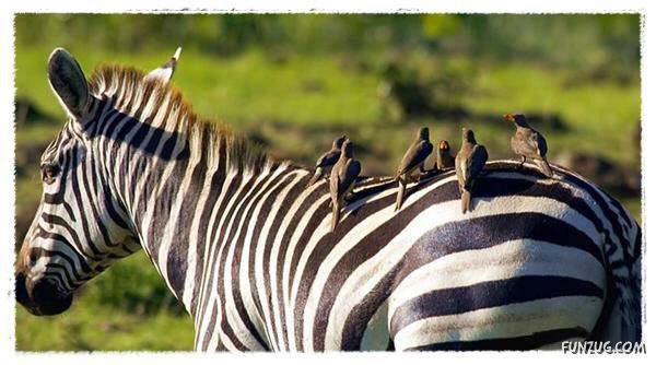 Some of the Most BeautifuL AnimaLs: Zebra, Otter, Horses, Wolf, Lion Cub...