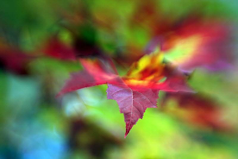 Nature Photos By Terry Cervi