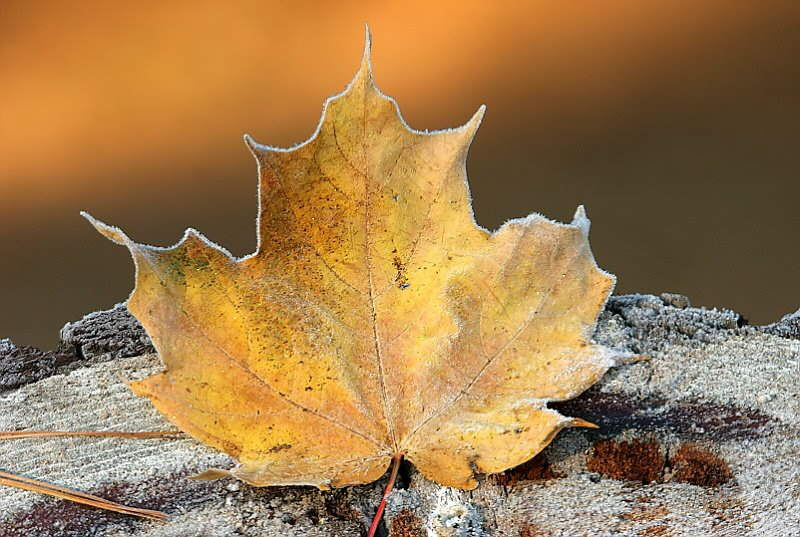 Nature Photos By Terry Cervi