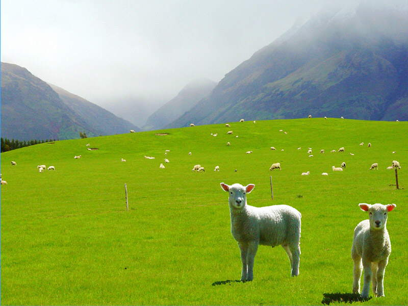 New Zealand: A Green, Exotic Country. Photos of New Zealand Landscape