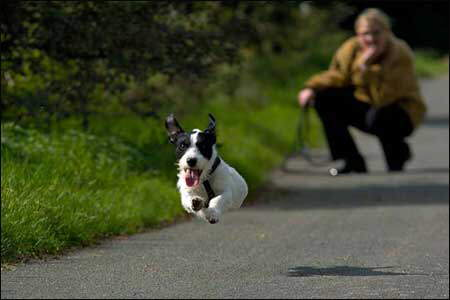 Dog Quotes: If your dog is fat, you aren't getting enough exercise!!!