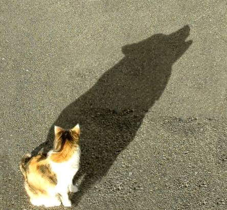 Dream Shadows... really touching!