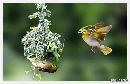 Beautiful Birds' Nests