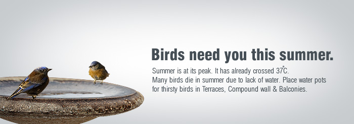 Help Animals this Summer