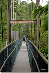 bridgetreetopwalk
