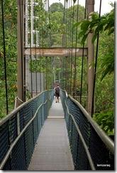 bridgetreetopwalk