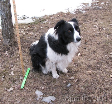 Chance and the snowstick April 07 2011