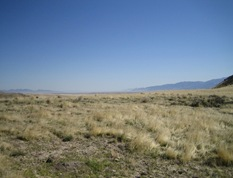 CedarMtnCheatgrass5