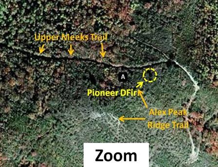 Pioneer DFir Map Zoom