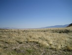 Cedar Mtn Cheatgrass