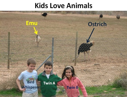 Kids Love Animals