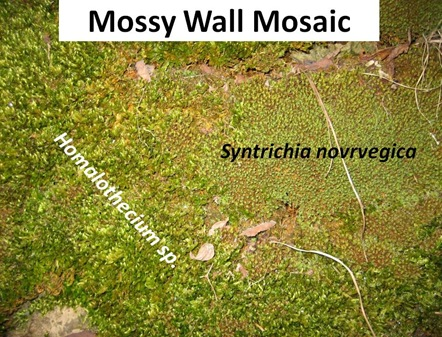Mossy Wall Mosaic