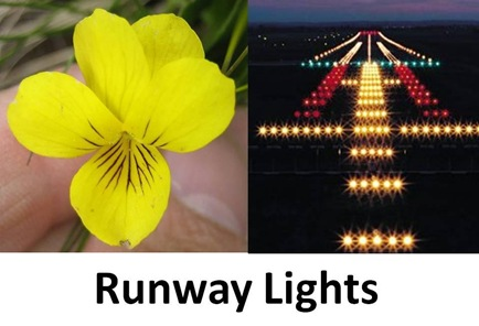 Runway Lights cut