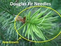 DFir New Needles