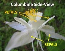 Columbine Sideview