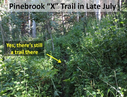 X trail July