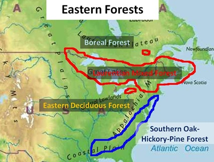 Eastern Forest Map