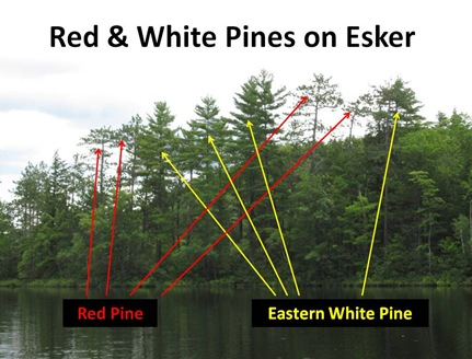 Red White Pines Esker