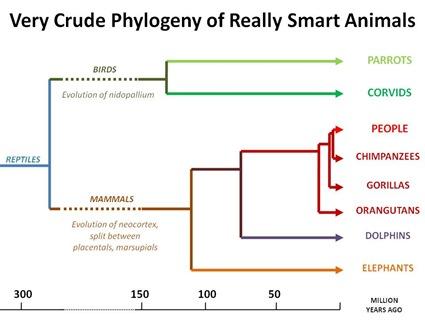 Smart Critter Phylogeny