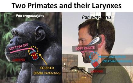Larynx Compare