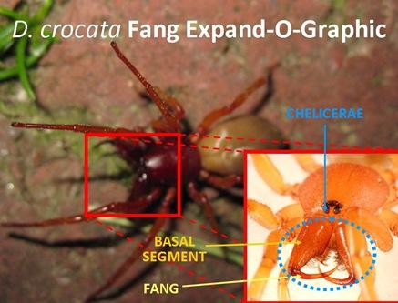 ExpandO Fang Bogus