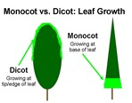 MonoDicot Leaf Fine