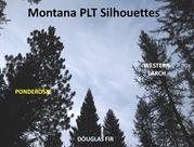 PLTSilhouettes4