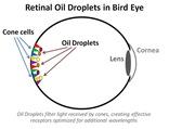BirdEyeConesDroplets4