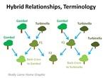 hybrid chart