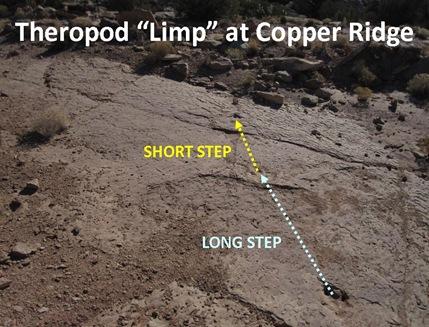 T limp