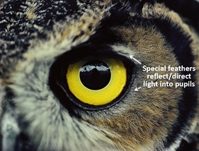 Owl Eye caption