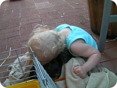 Emily loved the guinea pigs