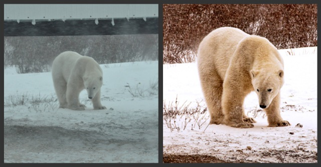 comparison between before and CS5