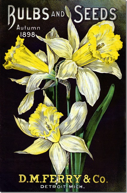 vintage-daffodils