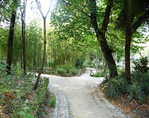 bambu glicinias