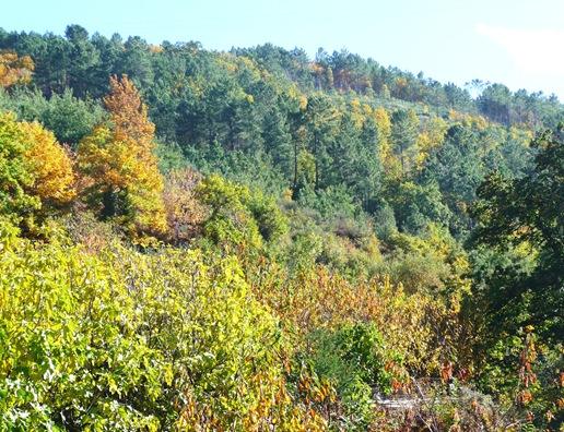 19. Fundão - folhas de outono