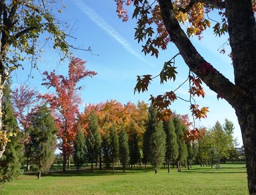 23. Parque municipal - mealhada