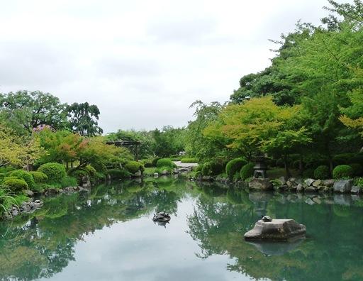 17.templo Toji - jardim - lago - tartarugas