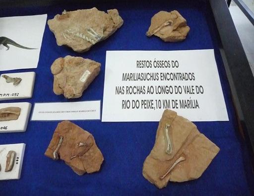 10. restos ósseos do Mariliasuchus encontrados em Marília