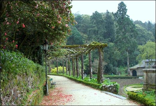 Buçaco - jardim do palácio - camélias, pergola 1
