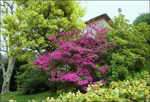 Buçaco - jardim do palácio 16