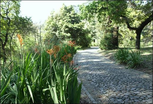 jardim serralves  - caminho de  flores