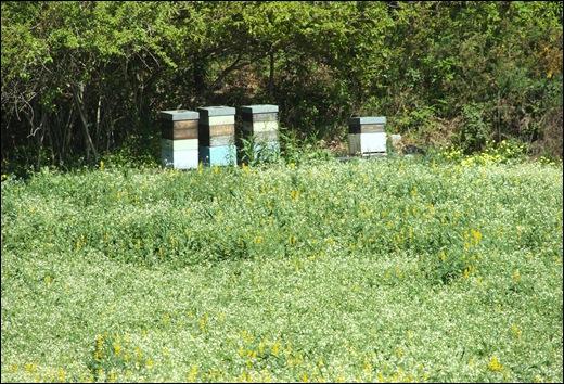 jardim serralves  - apicultura