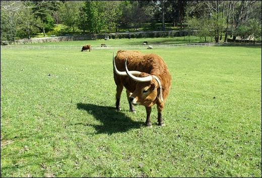 jardim serralves - gado