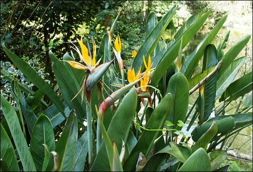 jardim serralves  - estrelicias