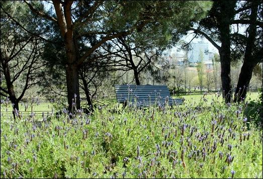 jardim serralves - porto - jardim aromaticas 1