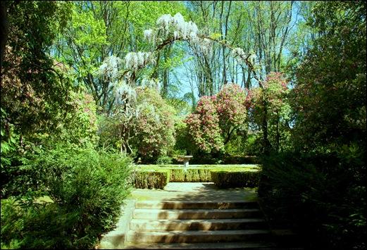 jardim serralves - porto - jardim - rododendron e glicinia branca