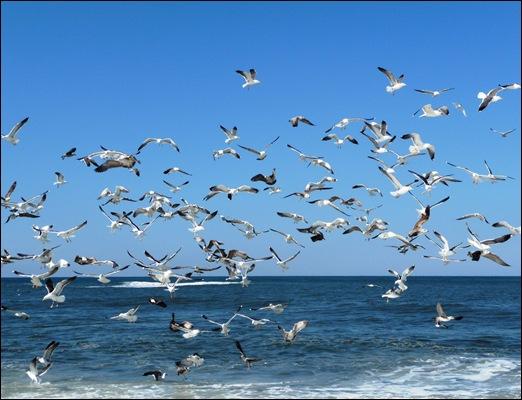 Praia de Mira - gaivotas 3