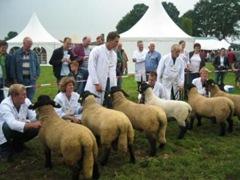 schapenfair1