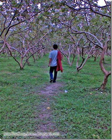 Aq di Kebun Jambu Selorejo